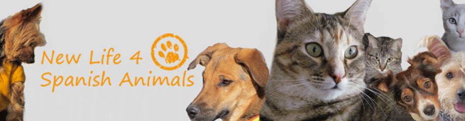 Tiervermittlung Vermittlung Von Katzen Und Hunden Aus